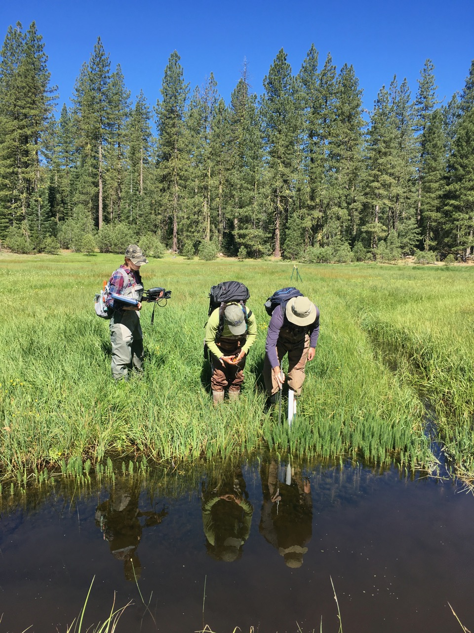 Researchers from U.C. Davis measure groundwater at Childs Meadows, Tehama County, California. Photo by Erica Gies.
