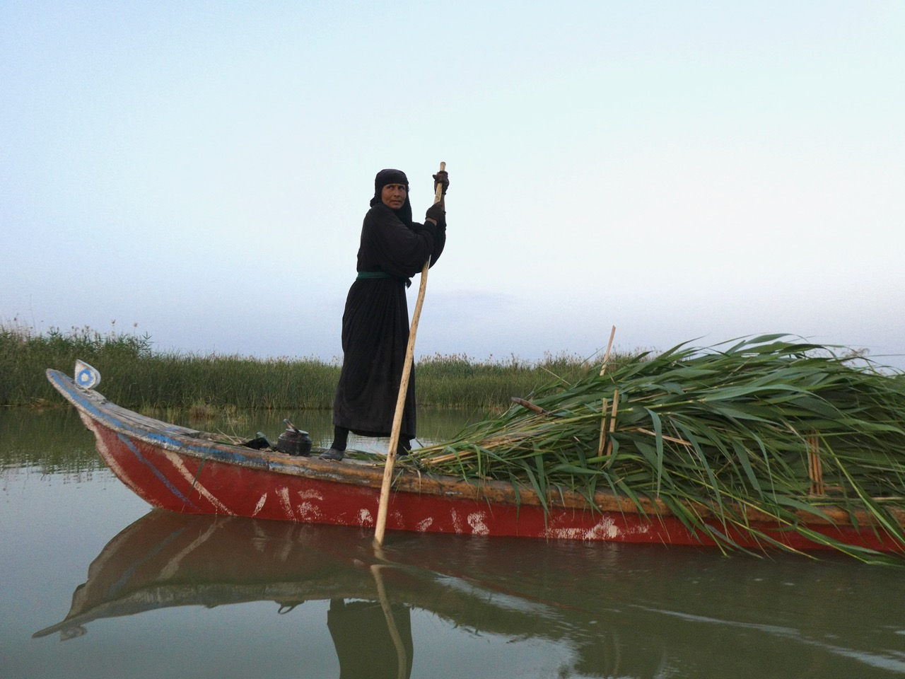 A woman who lives on the Mesopotamian Marshes near Chibayish, Iraq, poles her boat home at dusk with a load of Phragmites australis, native reeds locals use for building materials. Photo by Erica Gies.