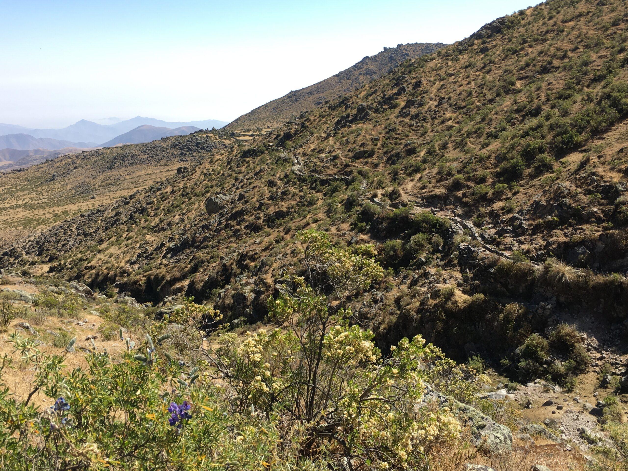 Amuna in the highlands of Peru.